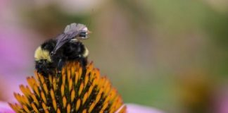 Lebah Bisa Bantu Petani Pantau Kesehatan Tanaman